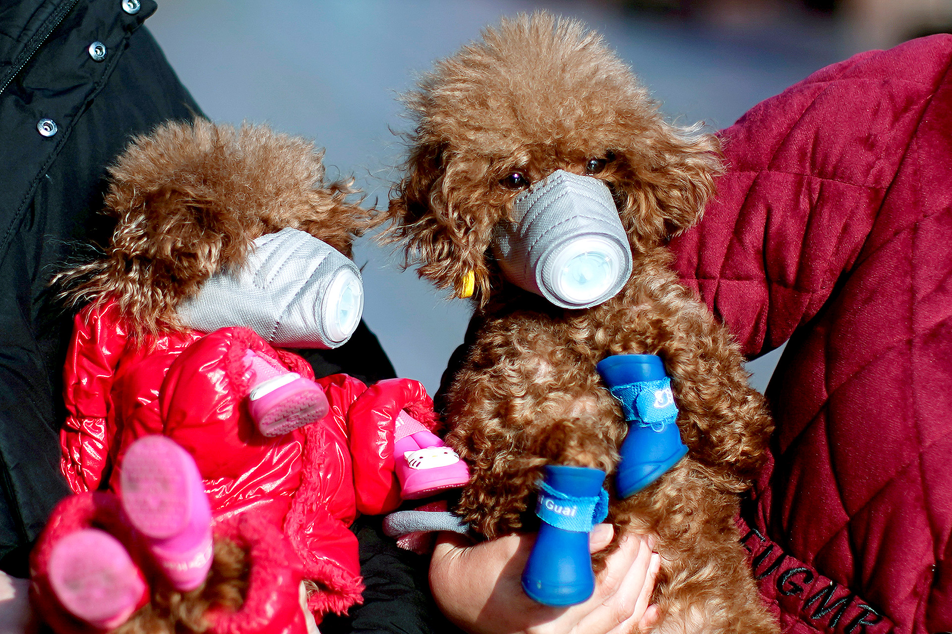 Los perros con máscaras son vistos en una zona comercial en el centro de Shanghai, China; la gente busca recursos para proteger a sus mascotas (REUTERS / Aly Song)