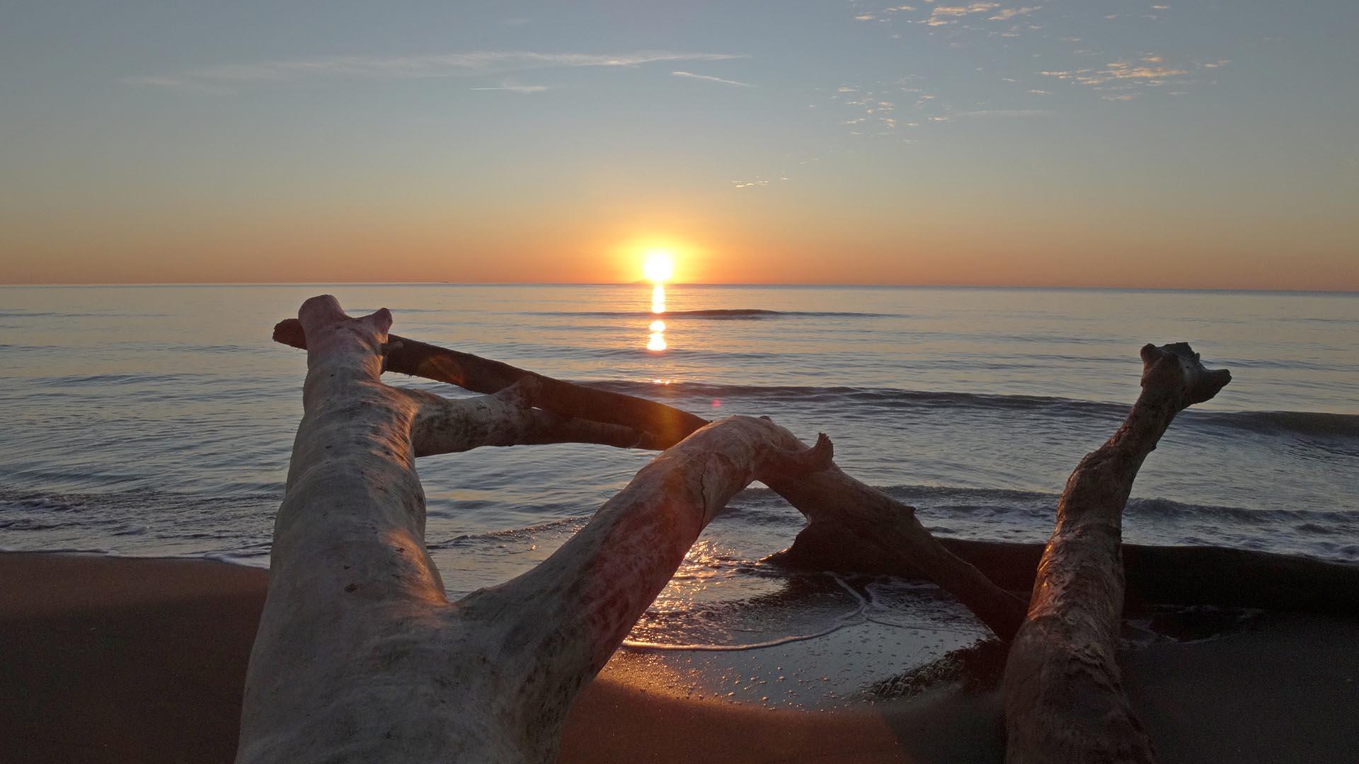 """Este parque nacional alberga excursionistas y más que unos pocos """"cinghiale"""" o jabalíes. Con un énfasis en la conservación, y solo se permite un número limitado de visitantes cada día, este sigue siendo uno de los oasis verdaderos de la costa, con troncos de árboles esculturales en la arena, perfectos para crear una carpa con toallas, y franjas de playa vacías e íntimas"""