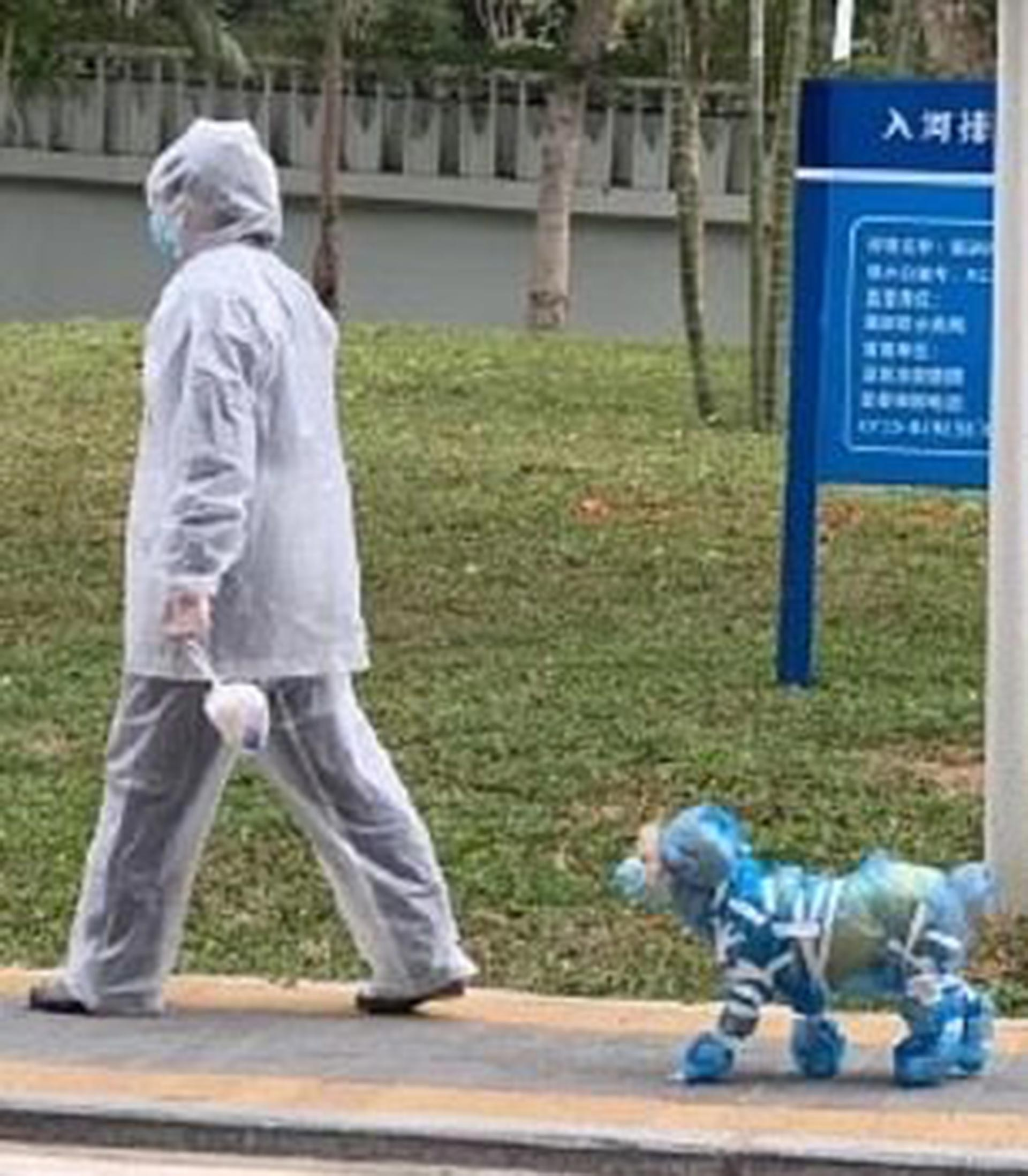 En los últimos días se han dado numerosos casos de abandono de mascotas, según la prensa local, y en redes sociales algunos afirman que en ciudades como Tianjin (norte) o Shanghái (este) algunas personas han matado a sus mascotas lanzándolas desde la terraza de sus hogares, aunque ninguna institución oficial ha confirmado tal extremo por ahora