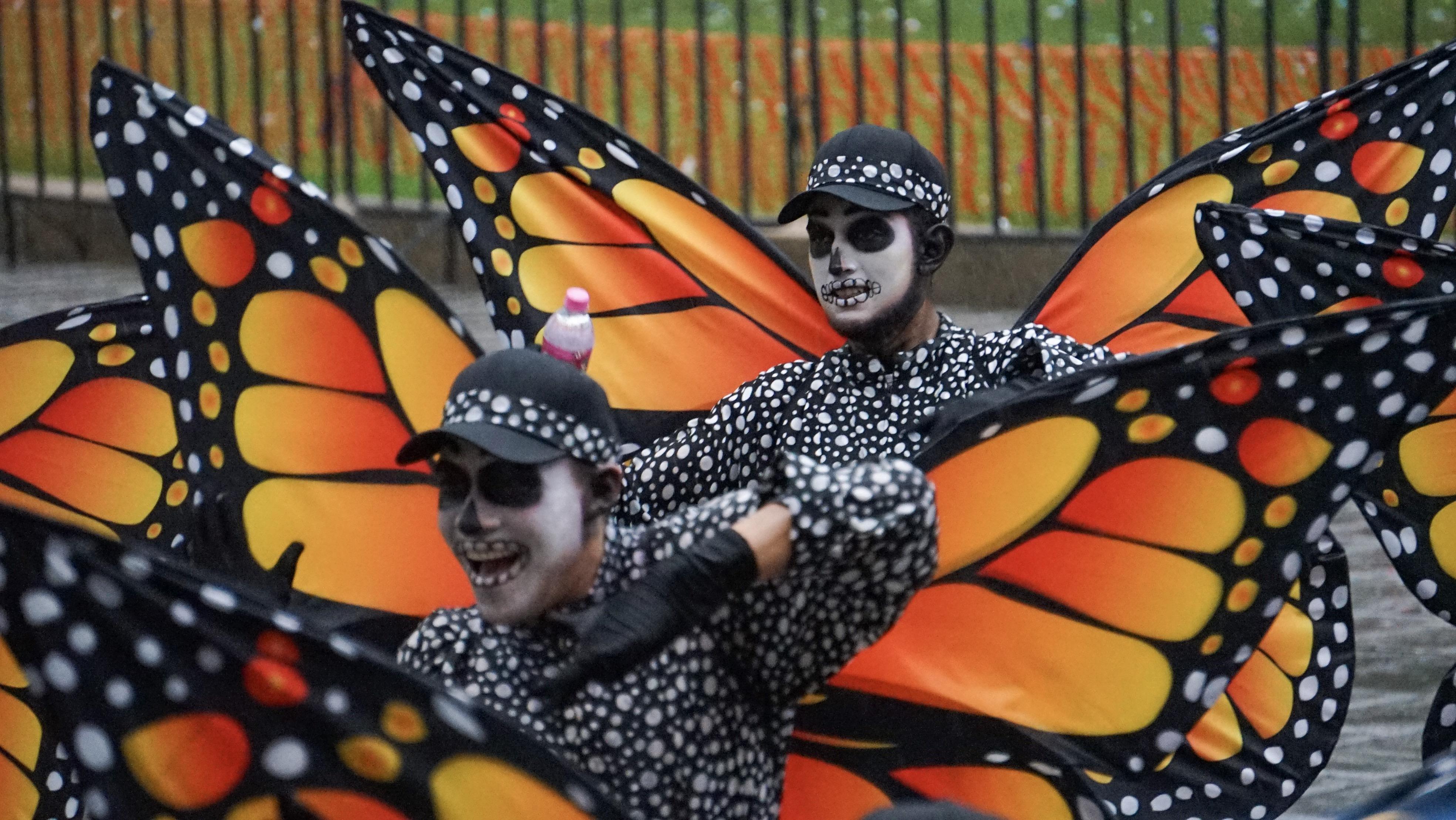 Las mariposas monarcas son un símbolo de México gracias a que se han convertido en un atractivo turístico