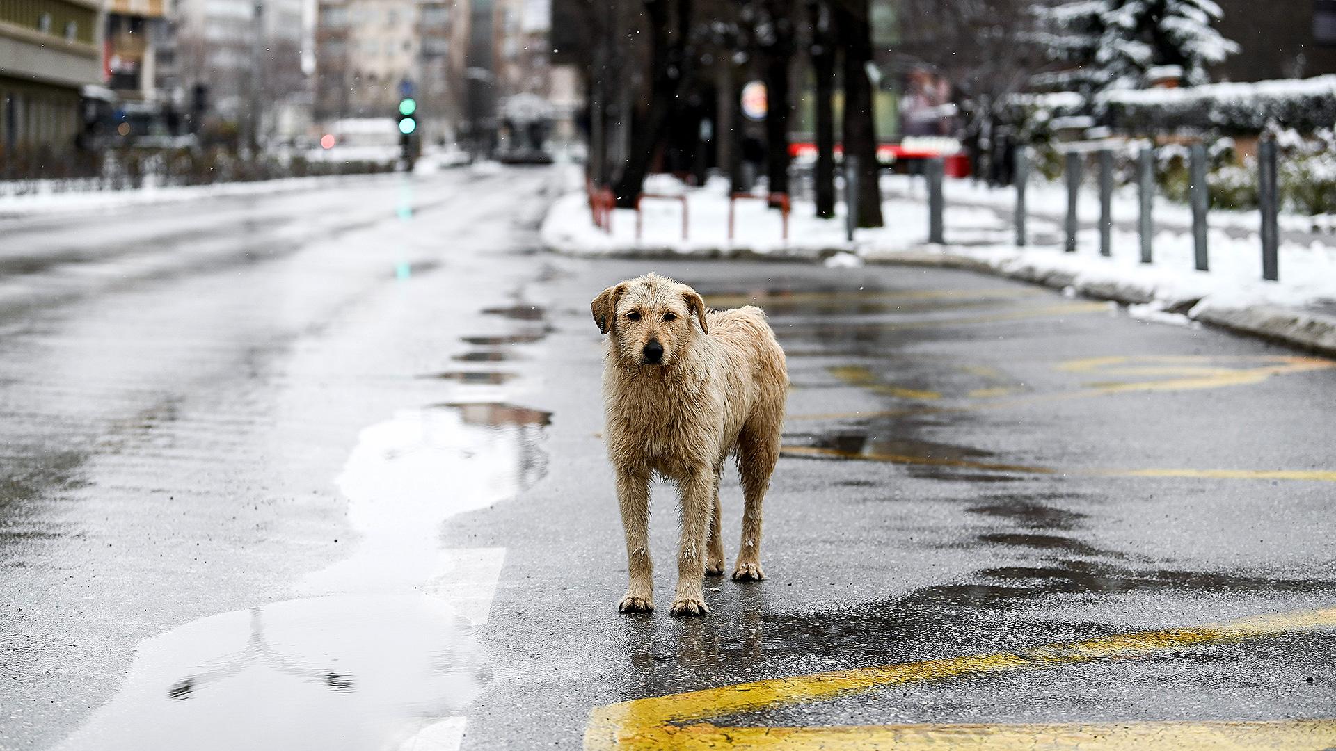 Un perro mojado por la lluvia en Kosovo