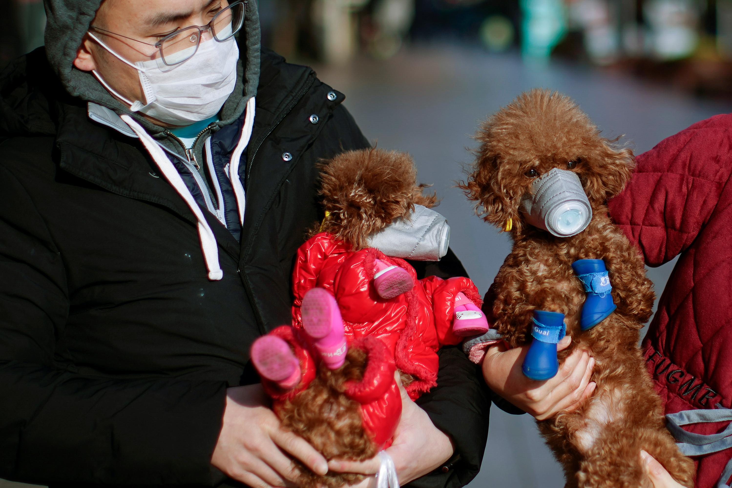 Mascotas usan mascarillas en el centro de Shanghái (Reuters)