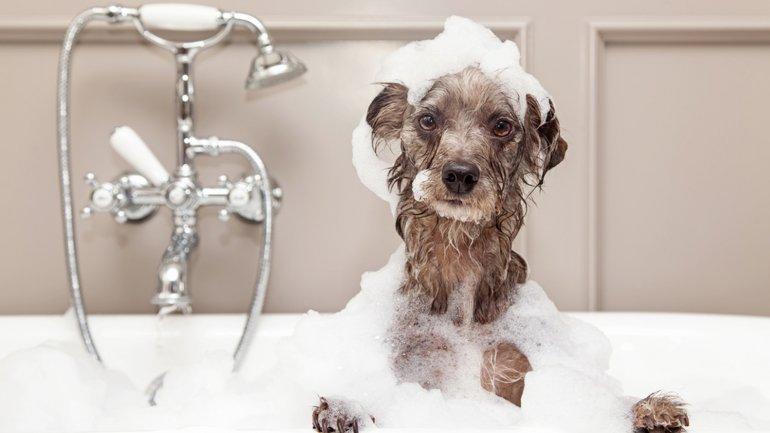 Los baños deben ser más frecuentes en verano
