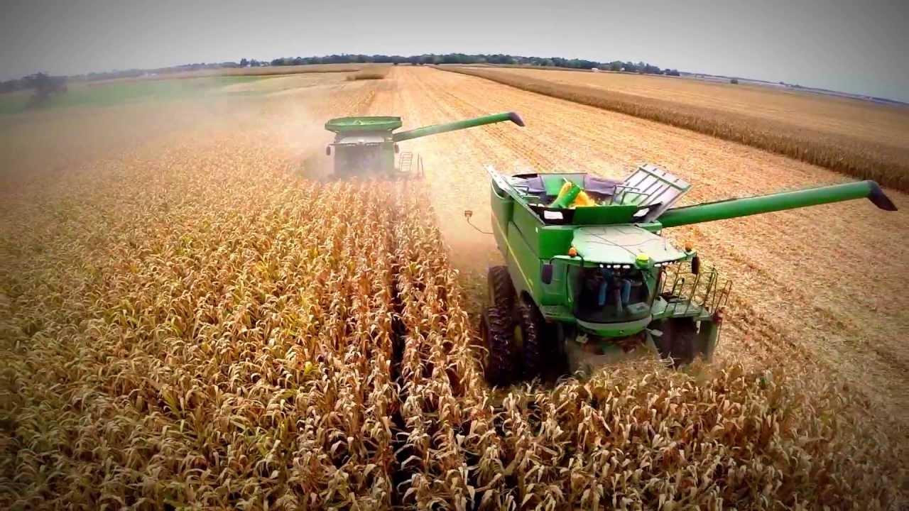 El maíz será uno de los principales cultivos durante esta campaña agrícola