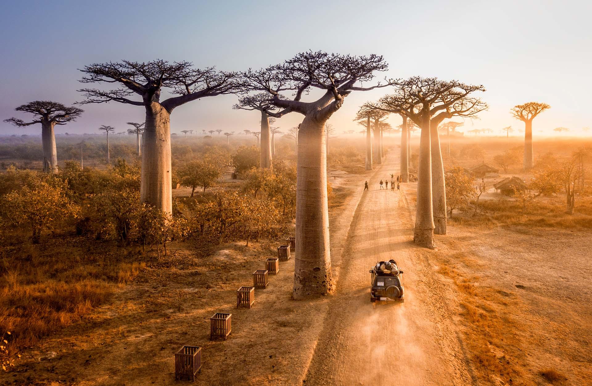 Lémures, baobabs, selva tropical, desierto, senderismo y buceo: Madagascar es un destino de ensueño para los entusiastas del aire libre. Visitar los árboles Baobab en Madagascar es uno de los principales atractivos de este país