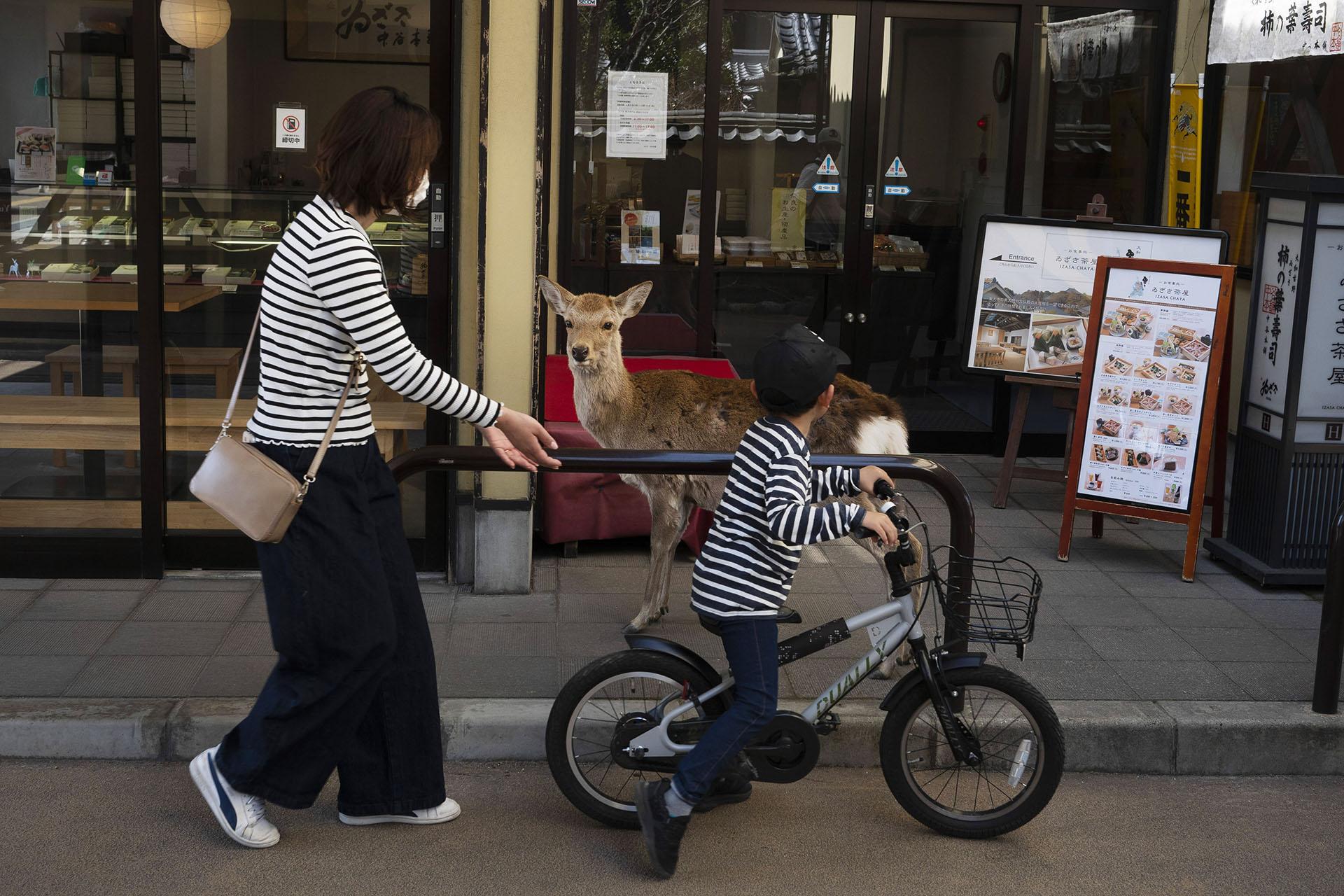 Un niño monta su bicicleta frente a un ciervo que deambula por la zona comercial de Nara, Japón (AP Photo / Jae C. Hong)