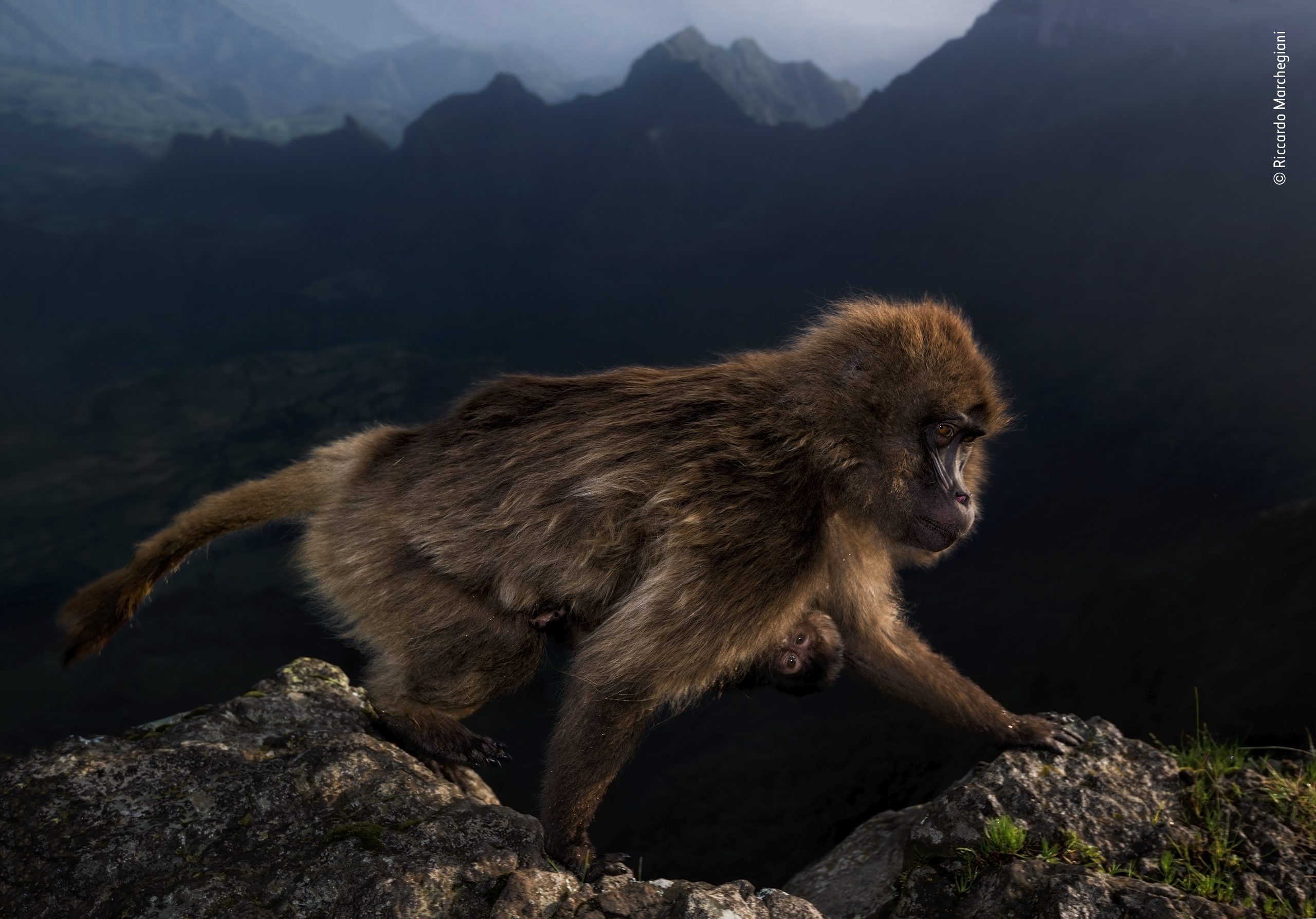 © Riccardo Marchegiani - Wildlife Photographer of the Year