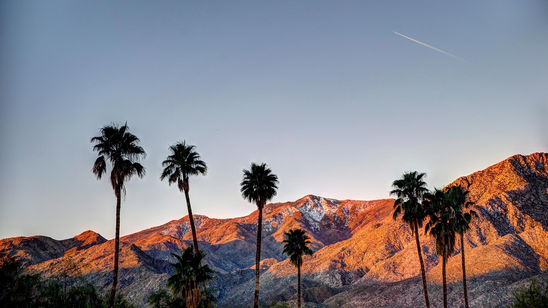 Para explorar casas que generalmente están fuera del alcance del turista, se recomienda unirse a uno de los recorridos autoguiados de Signature Home, donde los visitantes verán casas construidas en una variedad de estilos modernistas, como el desierto contemporáneo y el nuevo siglo. Este festival de arquitectura coincide con Art Palm Springs, en el Centro de Convenciones local, donde se exhibe y vende arte asequible de todo el mundo