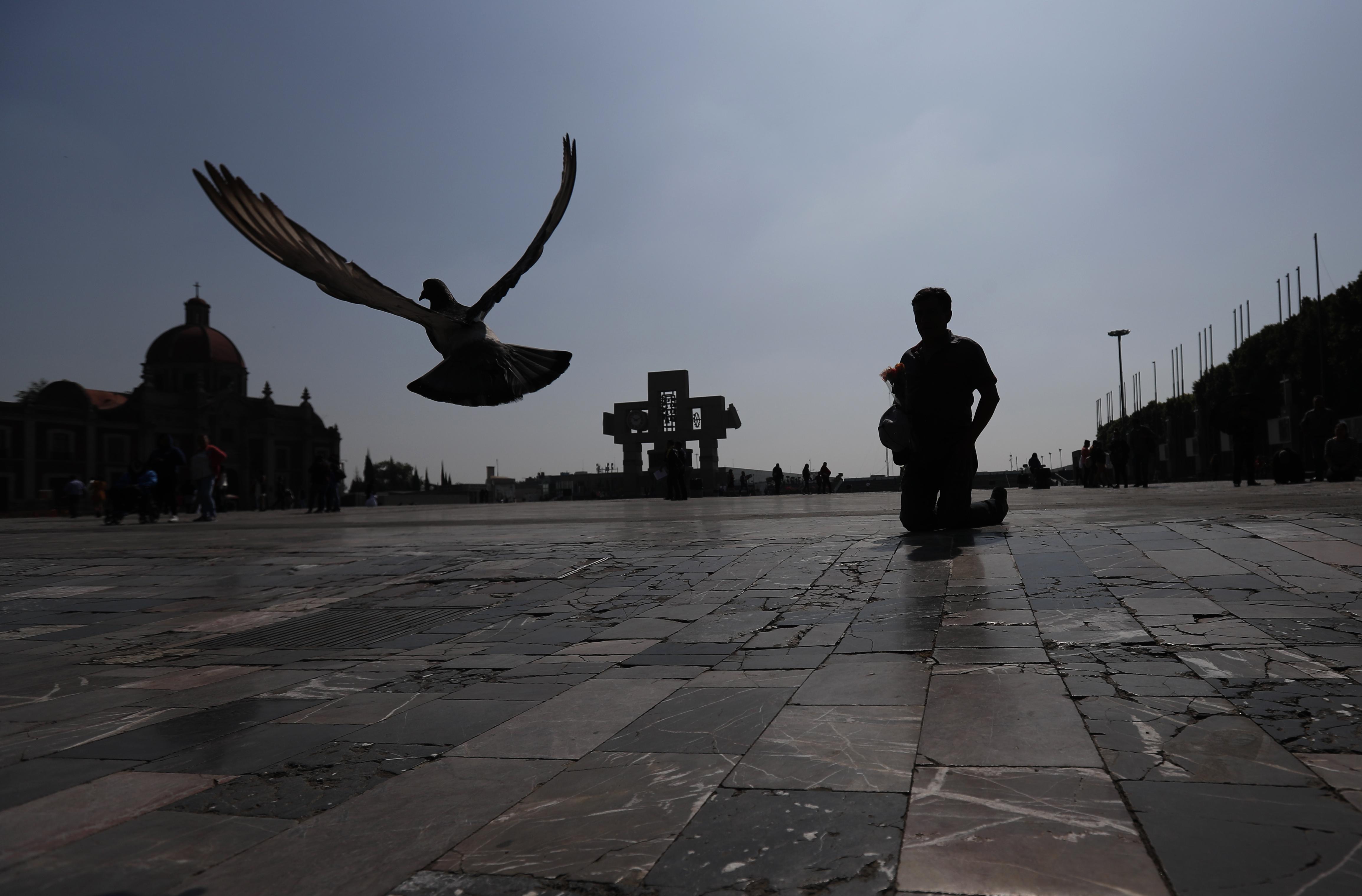 Una paloma vuela cuando un peregrino llega en penitencia a la Basílica de Guadalupe en la Ciudad de México, el domingo 22 de marzo de 2020.