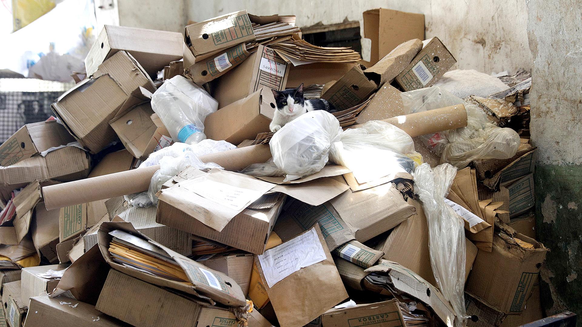 Un gato descansa en una montaña de cajas en Brasil, donde la cuarentena no es obligatoria