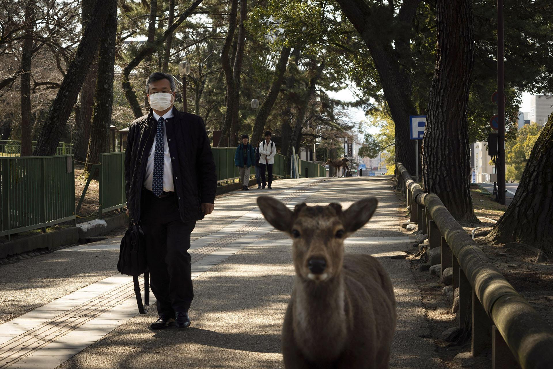 Una persona camina por una acera mientras dos venados deambulan por Nara, Japón (Foto AP / Jae C. Hong)