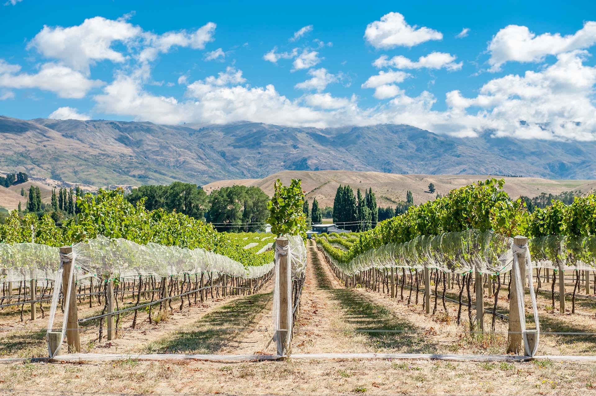 En la séptima región vinícola más grande de Nueva Zelanda, Central Otago, el viajero estará lejos de las multitudes y descubrirá algunos de los mejores Pinot Noir del mundo que crecen entre espectaculares paisajes alpinos. Aquí se encuentran los viñedos más australes de Nueva Zelanda y es la única región vinícola en la Tierra que ofrece una combinación de degustación de vinos y aventuras extremas: de bungy jumping a paracaidismo