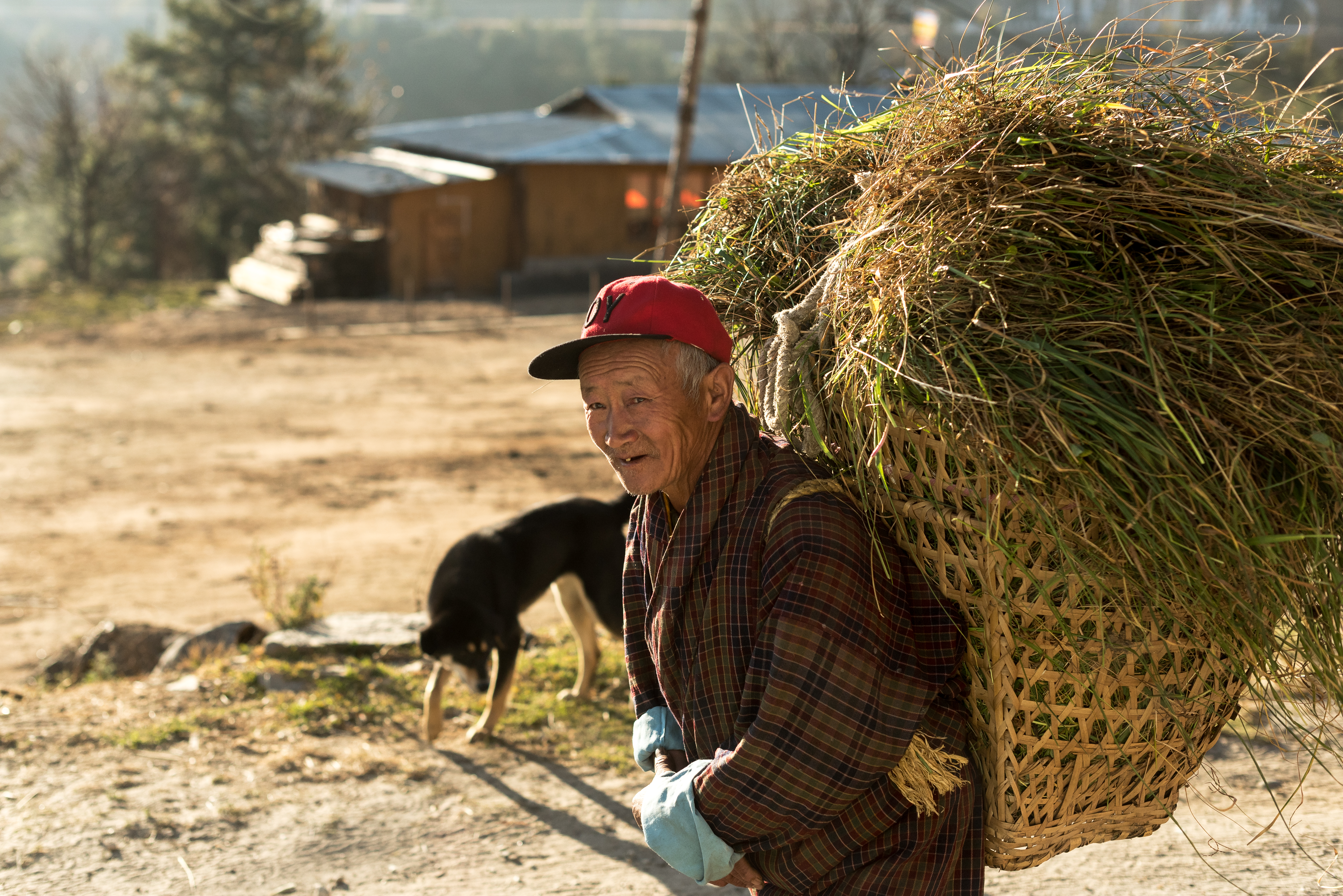 Gran parte de los butaneses viven de la agricultura, y a pesar de realizar tareas pesadas, lo viven con gratitud