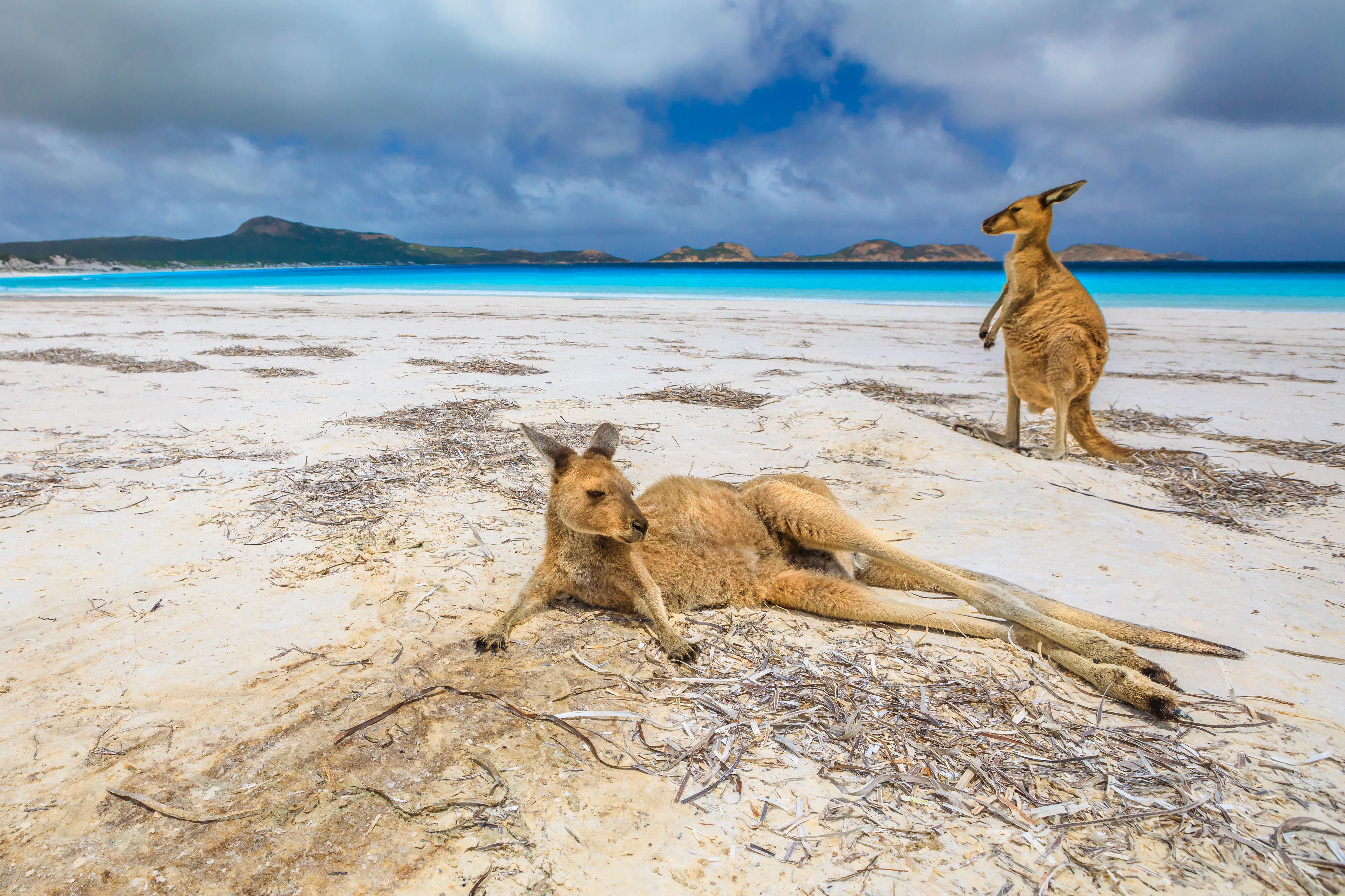 Lucky Bay en Australia Occidental ha sido calificado como uno de los mejores destinos de playa por sus aguas cristalinas y arenas blancas que se extienden hasta donde alcanza la vista. Tiene un promedio de 150.000 visitantes al año debido a su naturaleza virgen, clima maravilloso y arena extraordinaria