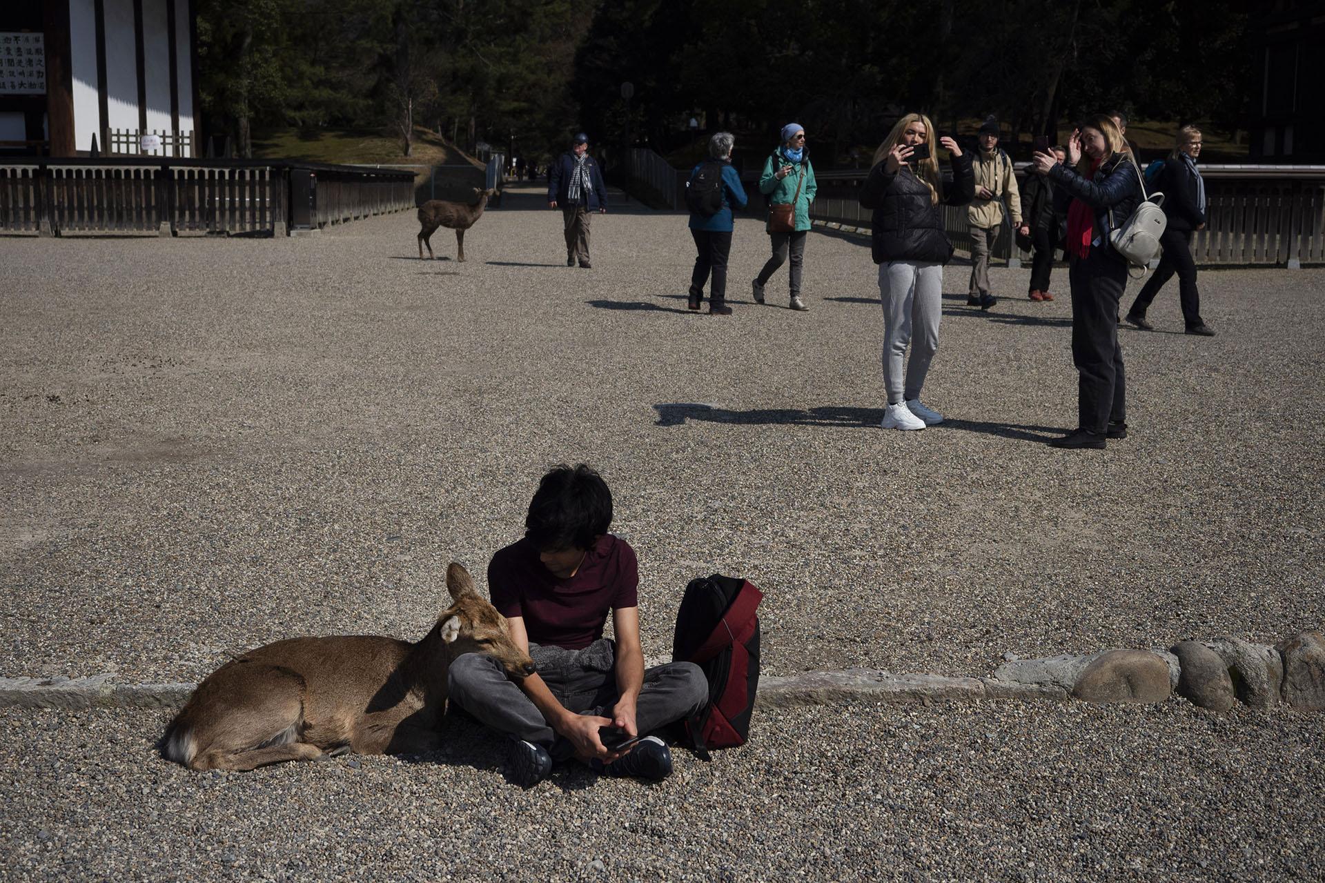 Un ciervo es abrazado por un turista en el templo Kofukuji en Nara, Japón (Foto AP / Jae C. Hong)