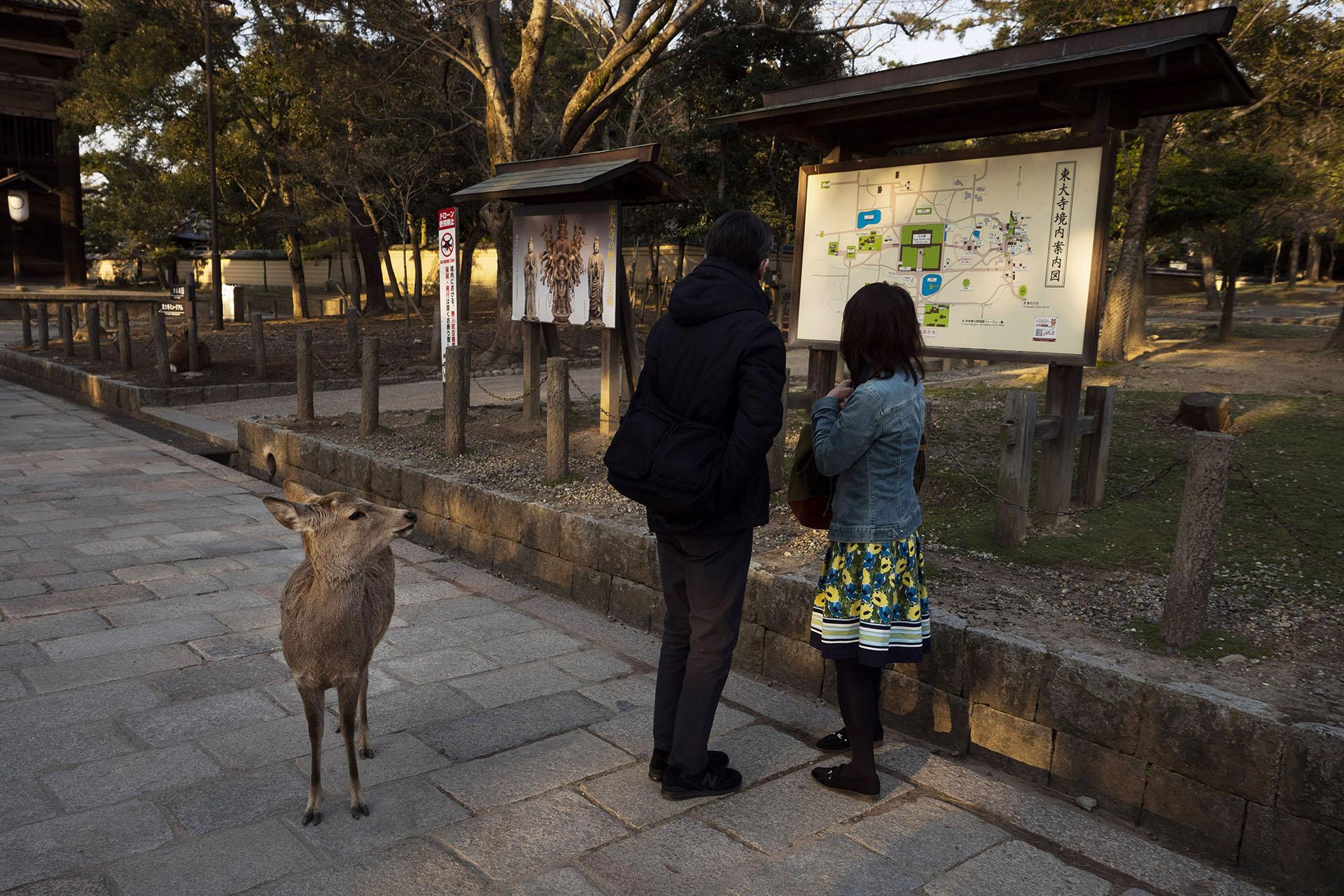 Un ciervo mira a dos visitantes de pie frente a un mapa del área fuera del templo Todaiji en Nara, Japón (Foto AP / Jae C. Hong)