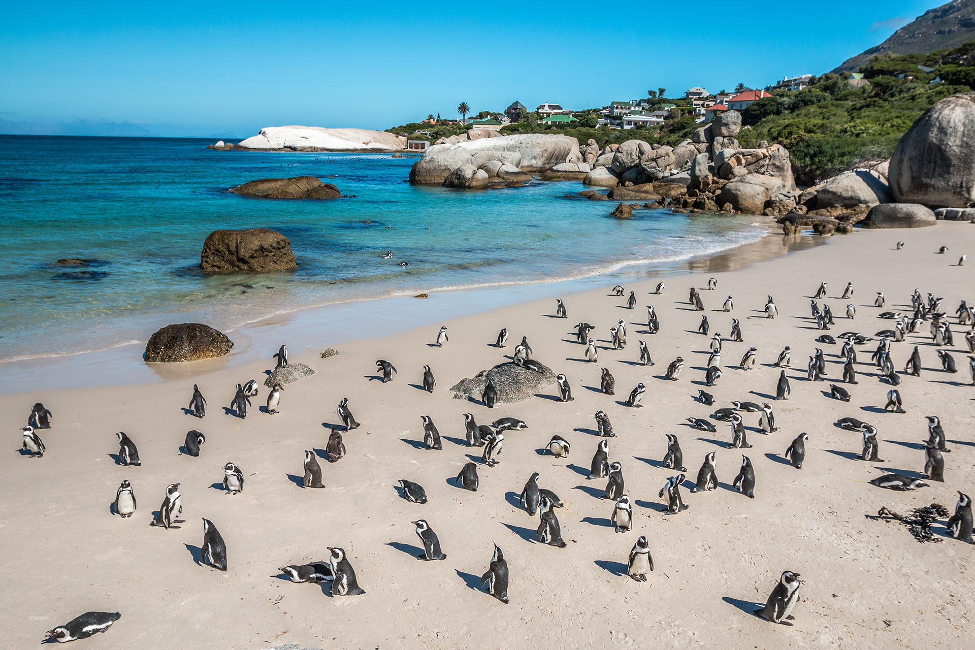 En Boulders Beach en la Península del Cabo de Sudáfrica, un día tropical se convierte en una nueva aventura. Las aguas azules más profundas permanecen protegidas y tranquilas, escondidas entre el granito para que el baño sea tranquilo y sereno. Como punto de referencia nacional, Boulders Beach y sus habitantes pingüinos esperan con ansias sus 60.000 visitantes anuales