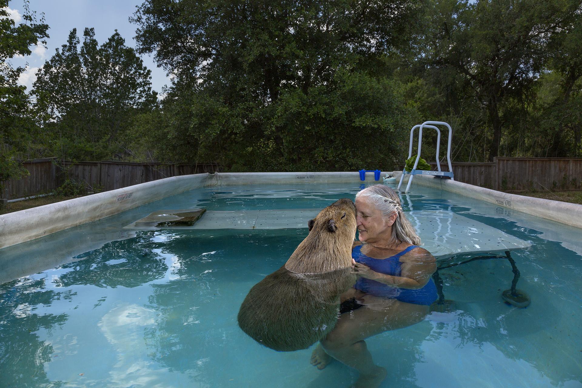 Melanie Typaldos nada junto su mascota, un carpincho de 55kg, en Buda, Texas. Vincent J. Musi, 2013